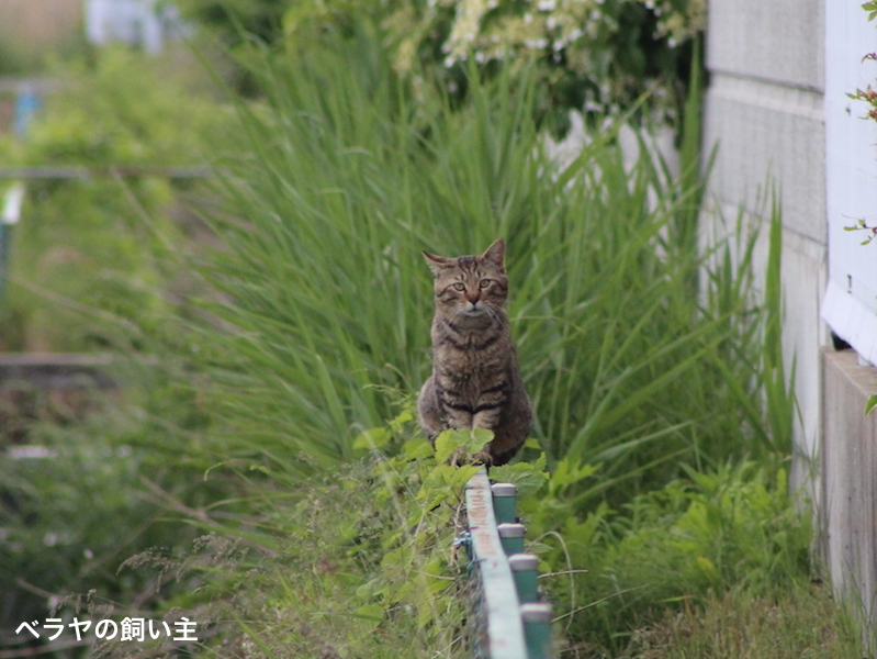 IMG_7428_BNK_Cat.jpg