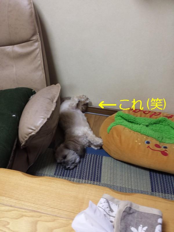 得意の寝姿