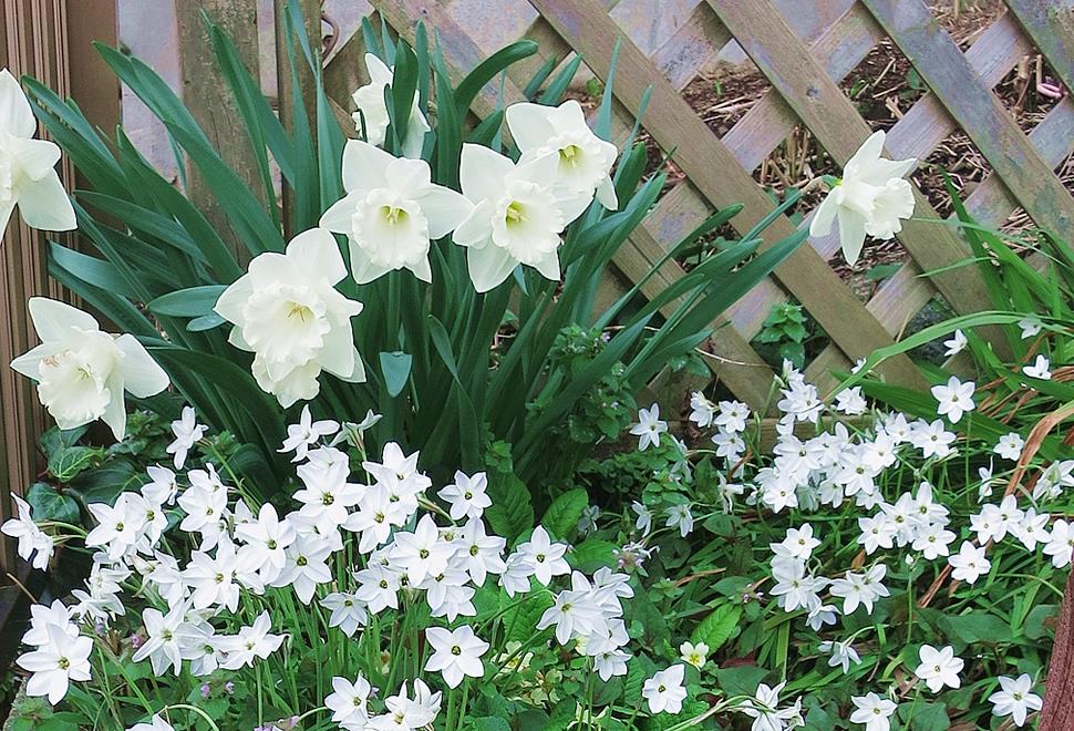 春に咲く球根のお花たち