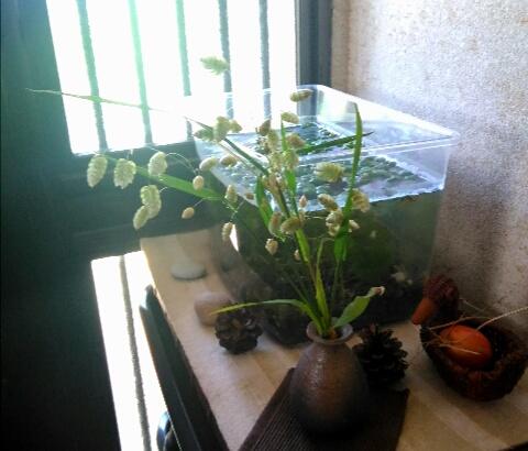 実家の「摘んだ花かざり」3