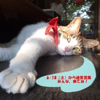 IMG_0846 - コピー (2)