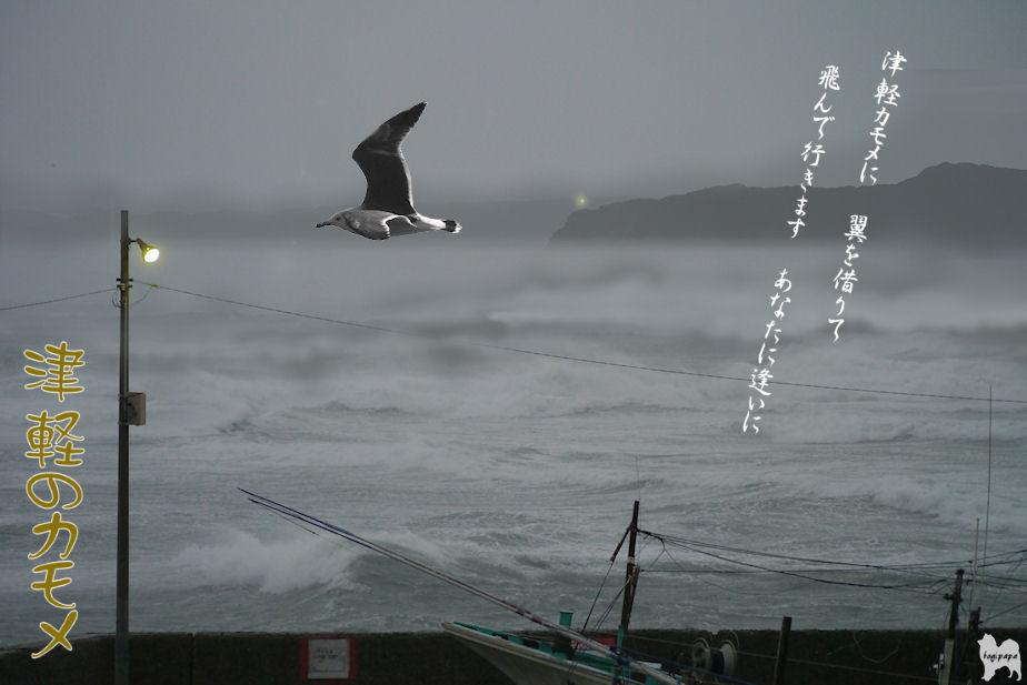 津軽のカモメ ♪ 合成