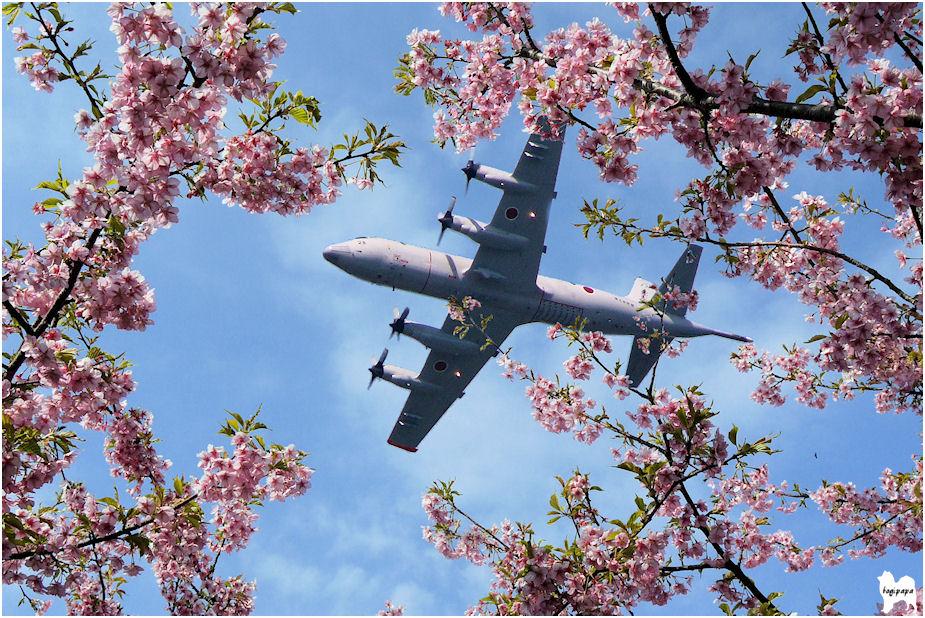 桜にP3C