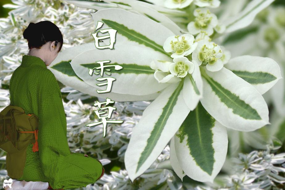 「白雪草」 合成 ♪