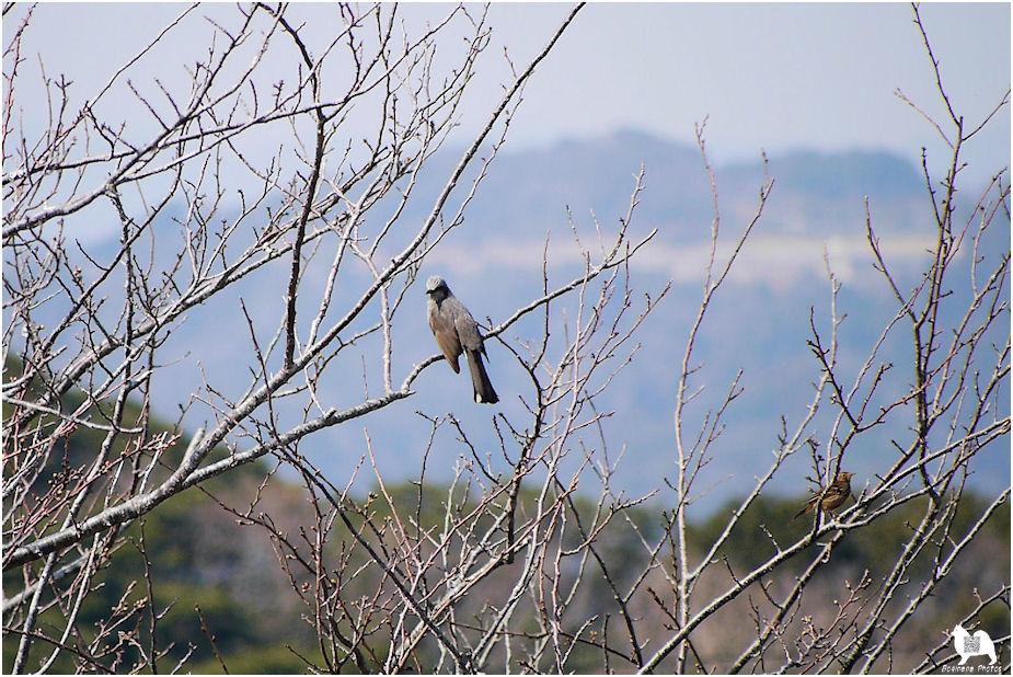 野鳥の合成写真