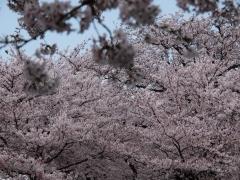 tamagawa_03.jpg
