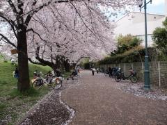 tamagawa_05.jpg