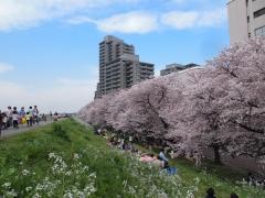 tamagawa_06.jpg