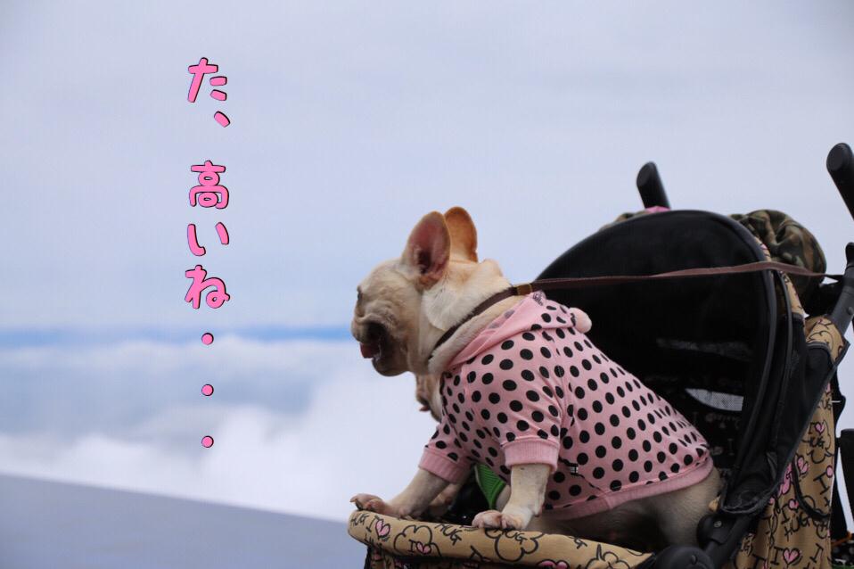 フレブル 子犬 琵琶湖バレイ 3
