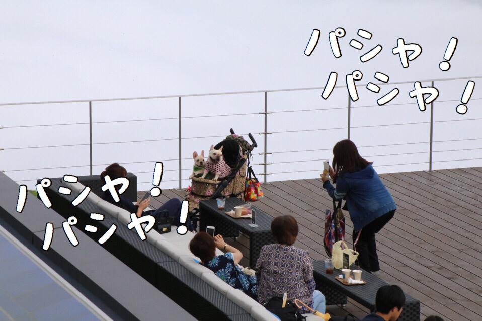 フレブル 子犬 琵琶湖バレイ 6