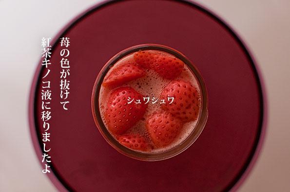 紅茶キノコ 苺で二次発酵