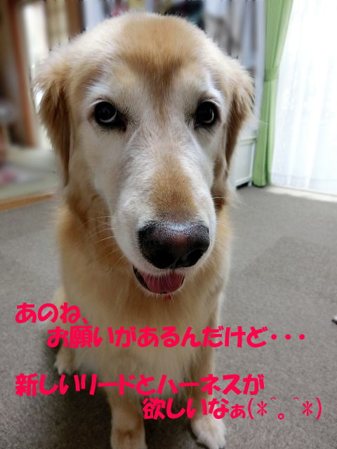 CCIMG4564.jpg