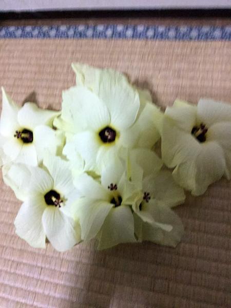 03オクラの花