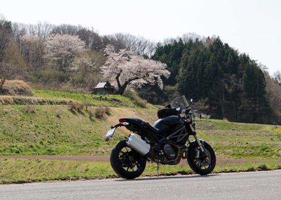 小沢の桜をバックに