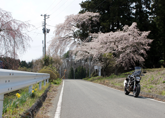 堂山王子神社の桜2