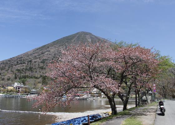 中禅寺湖 桜