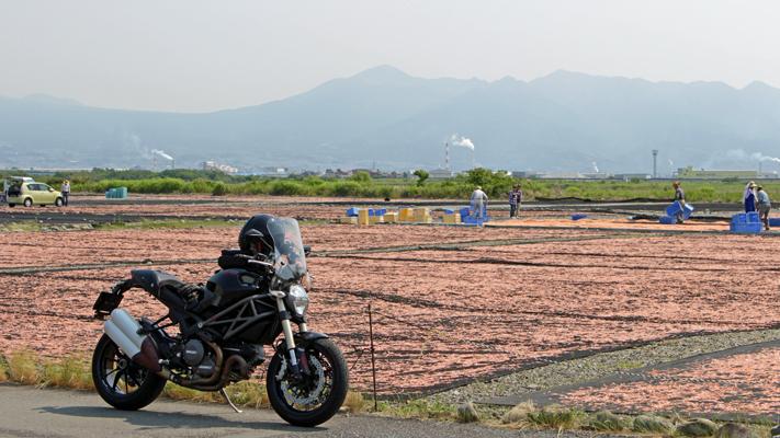 桜えび干し場