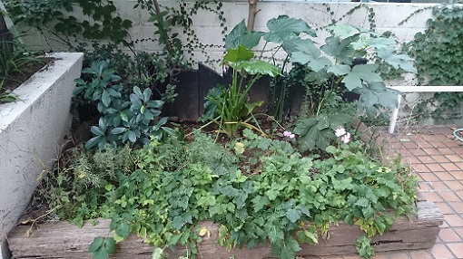 花壇の三つ葉