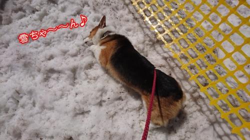 201608雪ちゃん