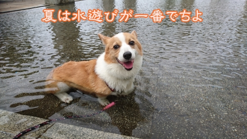 201608夏は水遊び