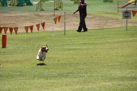 201608飛行犬