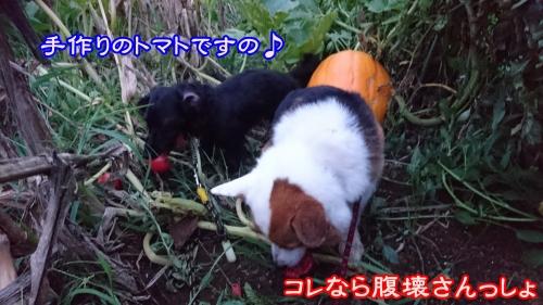 201609腹壊さんっしょ