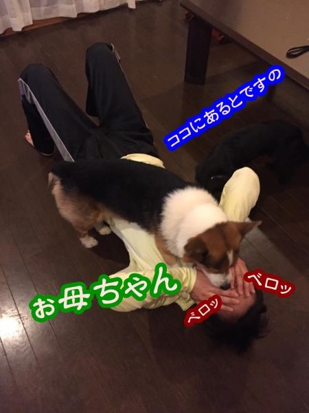 201609ぉ母ちゃん