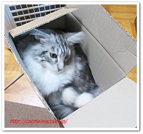 猫のセオリー。なぜ箱に入るのか?それはそこに箱があるからなのだ。