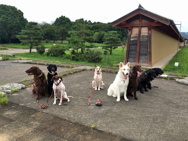 20160905_dog6.jpg