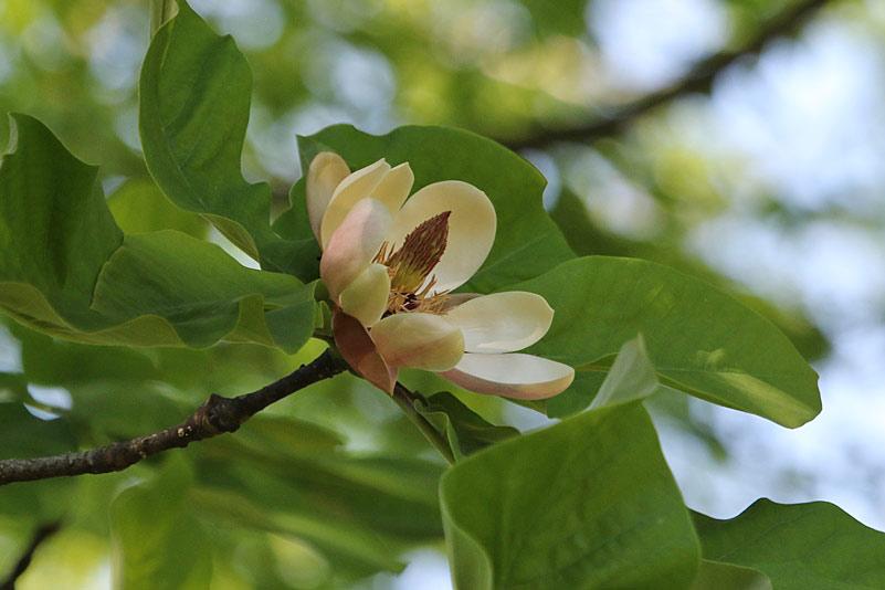 kumagai9515.jpg