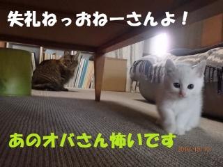blog161010_1.jpg