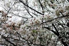 0404_04waki.jpg