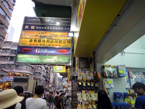 201606TungChoiStreet_HongKong-1.jpg