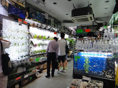 201606TungChoiStreet_HongKong-11.jpg