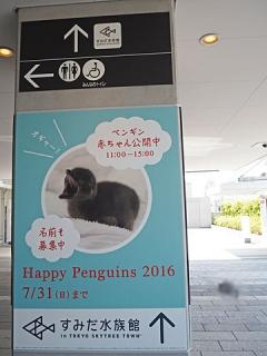 2016_07110046.jpg