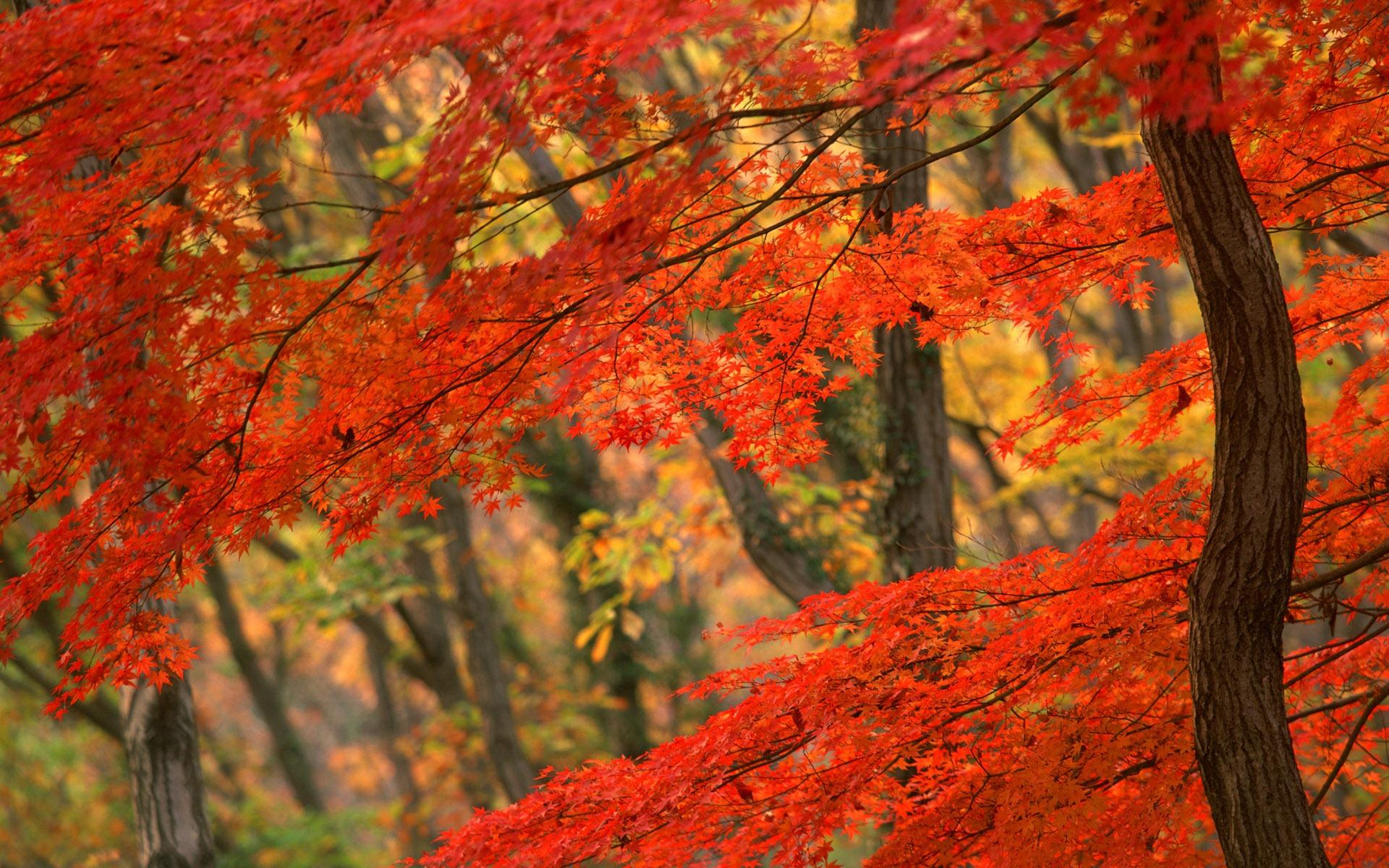 autumn-leaf-drawing-wallpaper-4.jpg