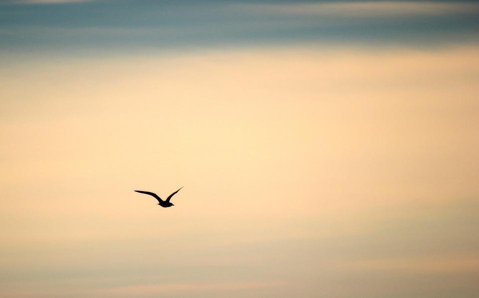 bird-189347_960_720.jpg