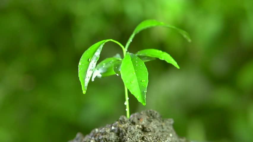 leafwithraindrop.jpg
