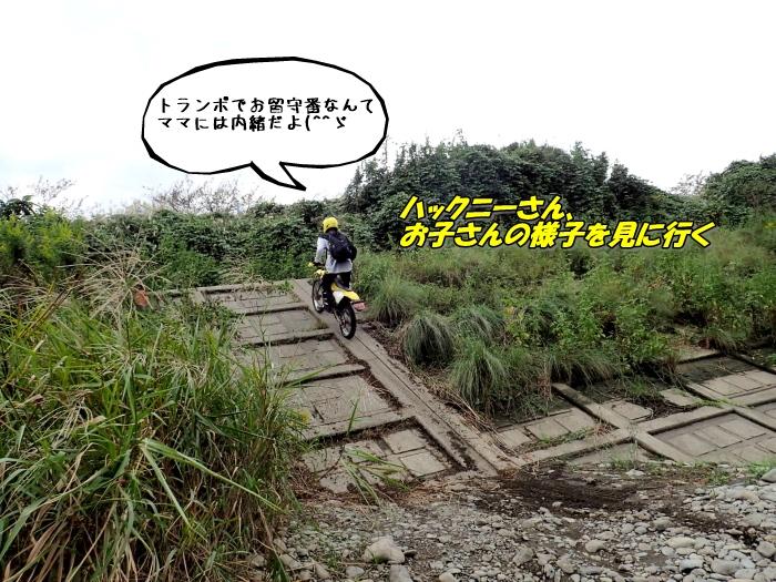 PA090173a.jpg
