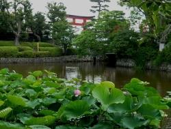 20160625鎌倉散歩10