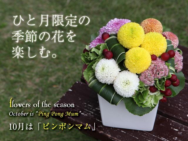10月の花 誕生日 贈り物 人気 アレンジ ピンポン菊