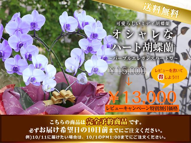 敬老の日 プレゼント 人気 胡蝶蘭 紫