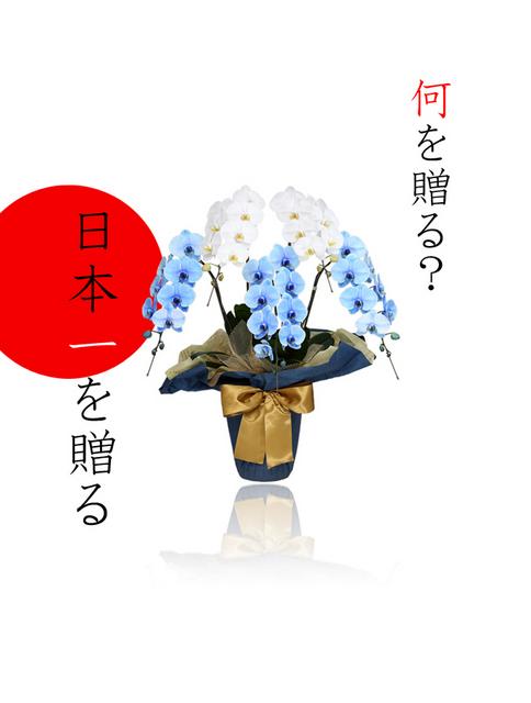 富士山 胡蝶蘭 贈答 サプライズ 青 宅配 記念