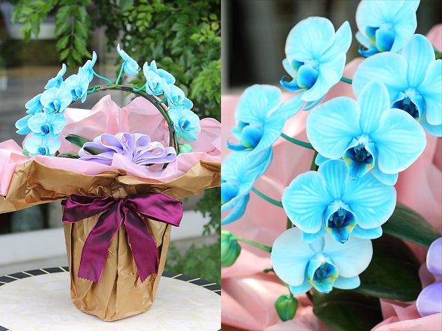 胡蝶蘭 夏 贈り物 青 バラ 花束 プロポーズ サプライズ