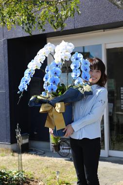 青い胡蝶蘭 ブルーエレガンス 豊川 花屋 花夢