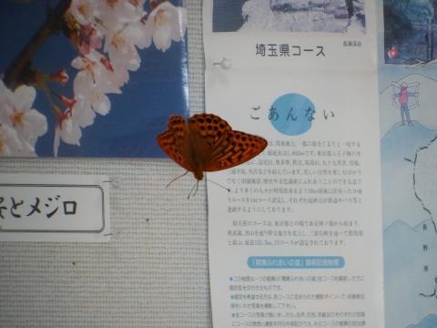 DSCF8437.jpg