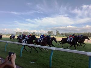 直線競馬は楽しー。