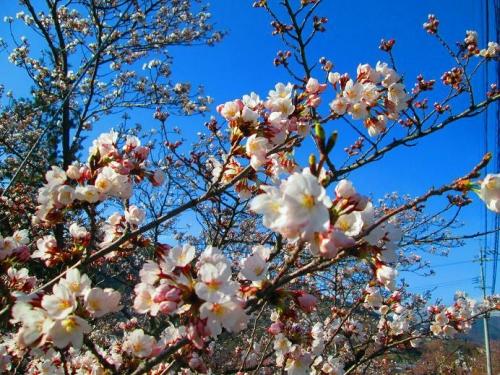 春が来る4