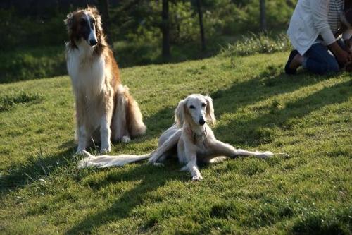 大型犬11