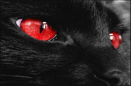 blackcatredeye.jpg